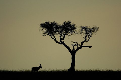 African landscape silhouette