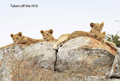 Lion lying on rock in the Kruger Park