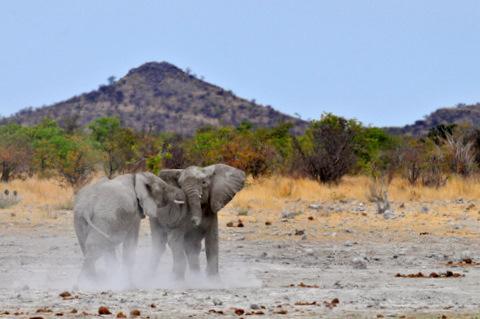 Elephants at Klippan waterhole
