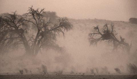 Dust storm, Kgalagadi Transfronteir Park