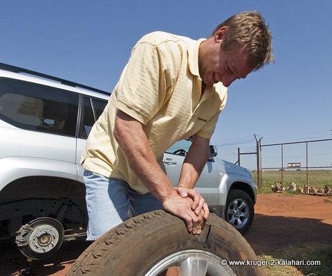 tyre bitten by lion
