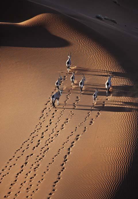 Gemsbok aerial photo