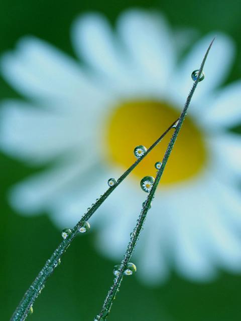Dew drops with flower inside