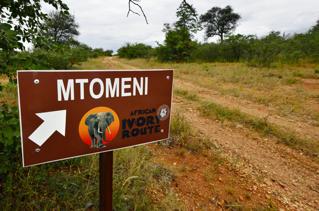 Mtomeni African Ivory Route
