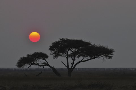 sunrise near Okaukuejo camp in etosha
