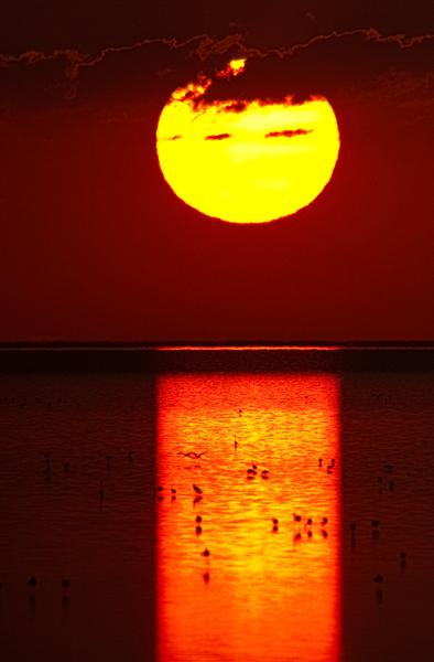 Onkoshi sunset in Etosha