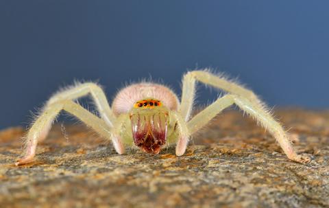 spider at f22