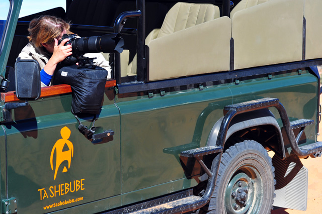 Photographing from the game drive vehicle