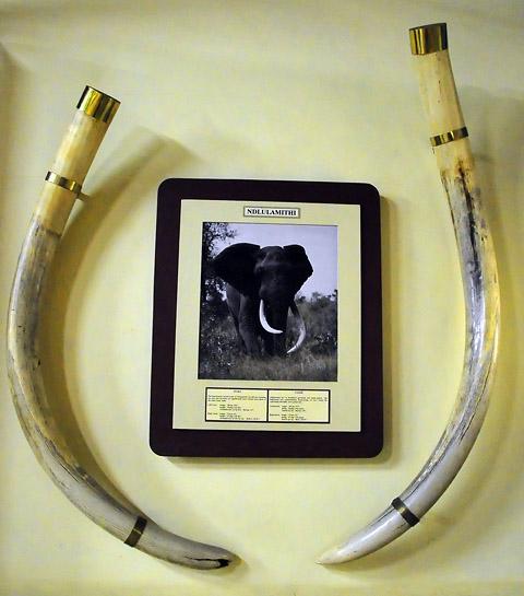 Ndlulamithi elephant