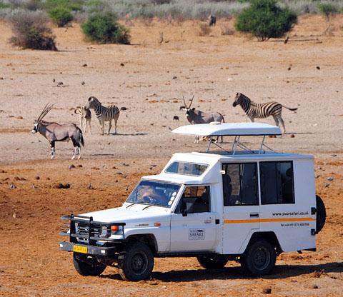 your safari photographing animals in etosha