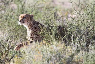 Mom sees Springbok