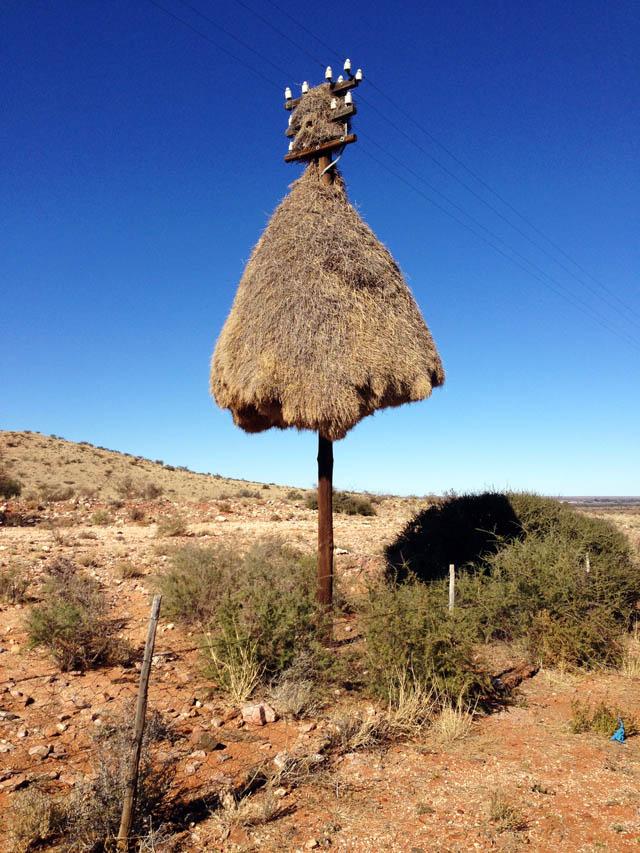 Weavers Nest on road side