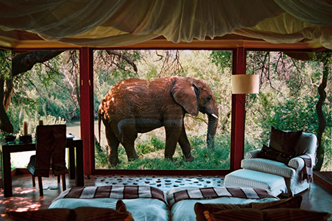 Image of elephant walking past Makanyane suite, copyright Makanyane Safari Lodge