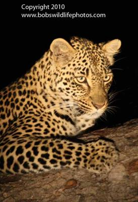 Leopard as if you didn't know