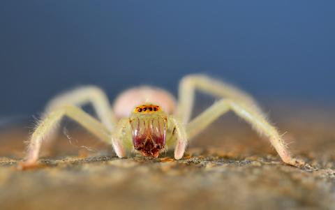 spider at f4