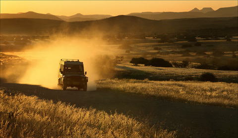 your safari guided game drive